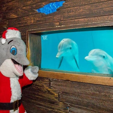 Winterwonderland at the clearwater marine aquarium