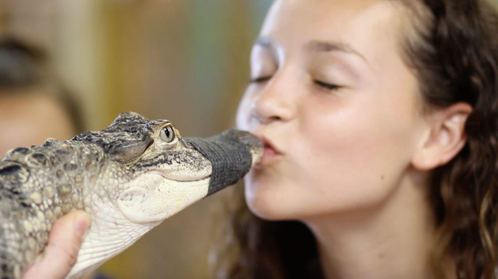 Love Reptile!  The Discovery Center is excited home to exotic animal surrenders & rescues at John's Pass Village in Madeira Beach.