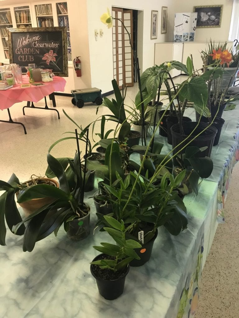 Clearwater Garden Club continues Mothers Day Plant sale