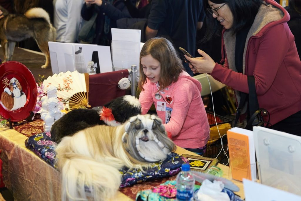 American Kennel Club Meet the Breeds